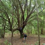 Sports, Nature et Vacances en Ligurie